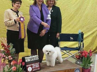 Best of breed 2019